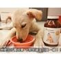 現貨【很優的犬貓營養補充品】【比菲寧3合1乳鐵蛋白】人嬰食用等級乳鐵蛋白,免疫球蛋白,初乳蛋白三百克裝