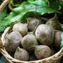 新鮮 甜菜根  (一斤$65 )