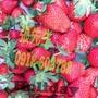 超值價格 380 大湖草莓 大顆一號 新鮮草莓 2.5台斤 超甜 零售批發 市場價