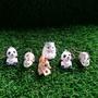 小動物 上學 兔子 貓熊 松鼠 黃金鼠 倉鼠 扭蛋