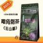 【125K百茶文化園】雞鵤刺茶(玉山薊雞角刺)22包/袋