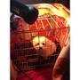 【現貨】寵物保暖燈寵物加熱燈可控溫寵物取暖燈狗狗 加熱烏龜蜘蛛取暖燈