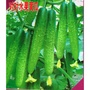 《種子花園》對對黃瓜水果黃瓜種子 甜脆水果小黃瓜種籽 青瓜四季播種蔬菜種籽熱銷