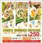 📣(100顆包裝)純手工水餃!超好吃的高麗菜.韭菜.玉米水餃👍