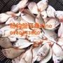 澎湖野生板鯛(盤子魚)一台斤200元真空包裝