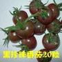 【疏果之家】【黑珍珠番茄種子】四季播黑色小番茄籽矮生櫻桃番茄小西紅柿種子