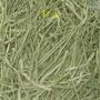 天go ~【10元牧草試吃】提摩西草、苜蓿、燕麥、草磚:每1包10元(一種牧草),請在聊聊告知購買種類