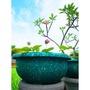 「台灣製造環保花盆」蓮花盆 2尺1(φ63X28cm) 、水蓮、睡蓮、矮盆、草花盆、養魚、養烏龜、荷花盆、水蓮盆、寵物盆
