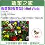 【蔬菜之家】 大包裝00H45.香堇花種子2克(約1600顆)