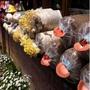 農場自種 菇菇太空包 每入$150 一箱出貨 香菇室內植物