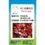 【蔬菜工坊】H37.松葉牡丹種子(混合色匍匐性)