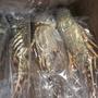 冷凍青殼龍蝦(250克)