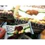 《預購》🌟MACADAMIA提拉米蘇巧克力🌟
