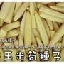 日本玉米筍種子~量販包