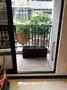 藝術盆栽美學【旺旺樹】廣傘楓(~室內外綠化造景盆栽首選(高約160cm)