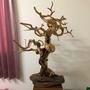 七里香 原木 展示藝品 已上底漆 很美 很大 藝術品