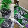 【韓國連線商品】 爆紅超Q彈巨峰葡萄果凍球 (7顆)