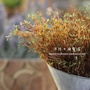 Autumn Textured Model plant fake grass plants