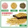 🐱貓草種子🐱 小麥種子 大麥 黑麥 燕麥 貓草 小麥草 大麥種子 吐毛球 日本燕麥 黑麥種子 小麥 麥草 貓草種子