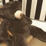 Costco53吋巨大泰迪熊🧸
