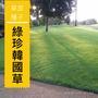 【草坪種籽】綠珍韓國草種子100公克
