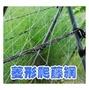園藝攀藤網(6尺x100米)菱形爬藤網