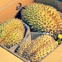 【鮮果日誌】★泰國產★水果之王金枕頭榴槤20斤重(約3~4顆)