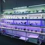 水耕種植設備