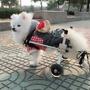 DYY》狗輪椅後肢癱瘓寵物代步車寵物輪椅S號
