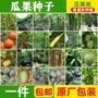 種子 \n四季蔬菜瓜果種子香芋南瓜絲瓜青瓜節瓜蒲瓜西瓜西葫蘆苦瓜種籽秋 熱銷