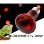 遠紅外線燈泡 紅外線燈泡 保溫燈 UVA加熱燈 陸龜 蜥蜴 守宮 紅外線