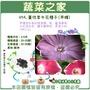 【蔬菜之家】H54.蔓性牽牛花種子(早輝)(共有2種包裝可選)