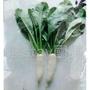 『農stay國輝』白玉蘿蔔種子.宜6月至12月栽培.大白扢小型蘿蔔生育強.農民契作無藥劑處理(蔬菜種子5公克30元/包)
