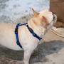 【包旺家】TTOUCH 調整試胸背 訓練寵物胸背 多色選擇S