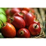 【阿金的便秘花園】樹番茄 Tamarillo(種子每份20顆120元)T016