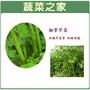 【蔬菜之家】大包裝F13.抽管芹菜種子80克(芹菜管,粗管抽苔青芹)