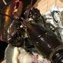 波士頓螯龍蝦  壹對大螯挑戰視覺極限 肉質緊實彈牙!