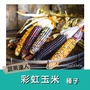 【蔬果達人】彩虹玉米種子~Ornamental Corn