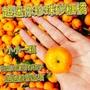 【台灣紅】迷你珍珠砂糖橘(5斤裝/箱)