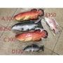 全新現貨  魚模型COS道具 假魚
