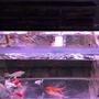 四尺標準魚缸