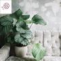 竹芋 觀葉植物喜陰植物綠植室內盆栽水培植物凈化空氣 青蘋果竹芋