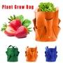 馬鈴薯草莓植物種植袋播種機陽台種植