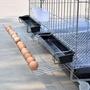 籠子雞籠子養殖籠鐵絲籠加粗養雞籠子雞舍家用特大號折疊自動滾蛋雞籠