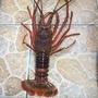 大一小磯鉤(龍蝦鉤)(野場池釣)龍蝦專用鉤