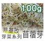 苜蓿芽(芽菜種子)-100g