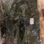 國軍數位迷彩外套