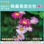 四季綠園--除蟲菊種子(混合色)-可作為切花、盆栽觀賞或布置花壇、花境,美化環境之用