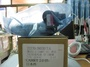 TOYOTA 05後CAMRY 2.0 日本製怠速馬達〈IAC〉