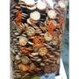 素食園~ 小奇福餅乾(原味) ~3000公克 ~鹹的~量販包~